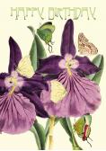 Karnet B6 brokat z kopertą Urodziny Orchidea