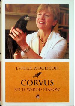 Corvus Życie wśród ptaków