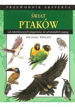 Świat ptaków