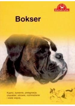 Pies na medal  Bokser