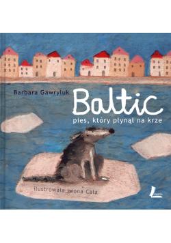 Baltic Pies który płynął na krze