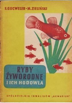 Ryby żyworodne i ich hodowla