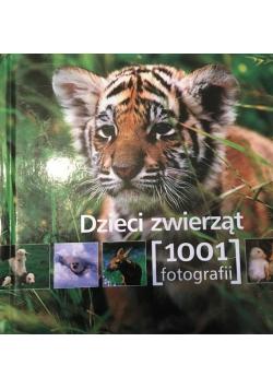 Dzieci zwierząt 1001 fotografii