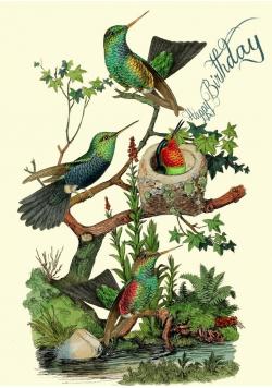 Karnet B6 z kopertą Urodziny Kolibry