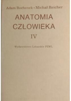 Anatomia człowieka IV