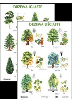 Plansza Drzewa liściaste Drzewa iglaste