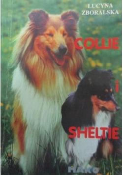 Collie i Sheltie