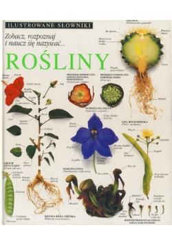 Rośliny Ilustrowany słownik