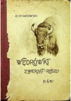 Wędrówki zwierząt i roślin 1925 r.