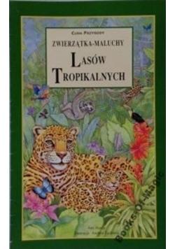 Zwierzątka - maluchy lasów tropikalnych