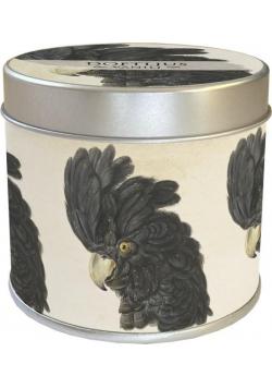 Zapachowa świeczka 161 - kakadu - zapach waniliowy